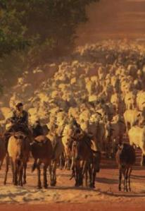 Amazon+cattle2 WWF Mines The Green Gold Rush To The Amazon: Making  $60 billion From Fear
