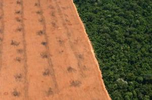 Amazon+soya WWF Mines The Green Gold Rush To The Amazon: Making  $60 billion From Fear